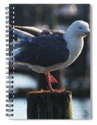 Sea Gull On Break Spiral Notebook