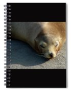 Sea Lion-00178 Spiral Notebook