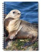 Sea Lion Pup Spiral Notebook