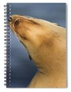 Sea Lion Stretch Spiral Notebook