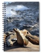 Sea Lions Seek Shelter Spiral Notebook