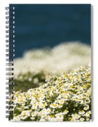Sea Mayweed And The Sea Spiral Notebook