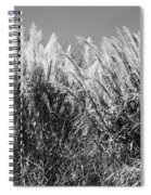 Sea Oats In The Glades Spiral Notebook
