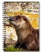 Sea Otter Spiral Notebook