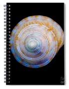 Sea Shell 3 Spiral Notebook