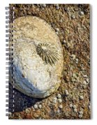 Sea Shell By The Seashore Spiral Notebook