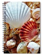 Sea Shells Spiral Notebook