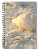Sea Shells Spiral Notebook