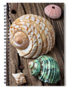 Sea Shells With Urchin  Spiral Notebook