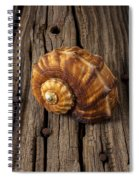 Sea Snail Shell On Old Wood Spiral Notebook
