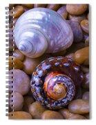 Sea Snail Shells Spiral Notebook