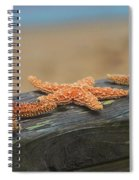 Sea Star Trio Spiral Notebook