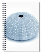 Sea Urchins Three In Blues Spiral Notebook