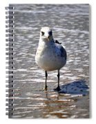 Seagull At Low Tide Spiral Notebook