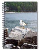 Seagull Awaits Spiral Notebook