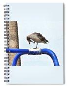 Seagull Balancing Act Spiral Notebook
