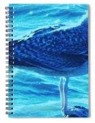 Seagull Basking In The Sun Spiral Notebook