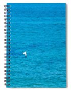 Seagull Cruising Over Azure Blue Sea Spiral Notebook