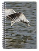 Seagull Dive Spiral Notebook