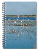 Seagull Flock Spiral Notebook