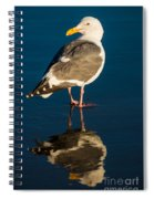 Seagull Harris Beach - Oregon Spiral Notebook