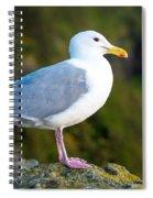 Seagull Heceta Head - Oregon Spiral Notebook