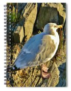 Seagull In Shadow Spiral Notebook