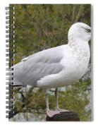 Seagull Outlook Spiral Notebook
