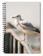 Seagull Standing On Rail Spiral Notebook