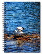Seagull Wings Lifted Spiral Notebook
