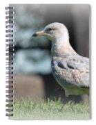 Seagulls 1 Spiral Notebook