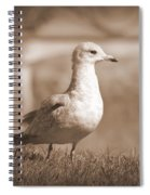Seagulls 2 Spiral Notebook