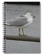Seagulls  Spiral Notebook