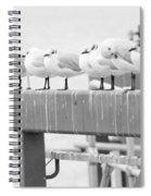 Seagulls In A Row Spiral Notebook