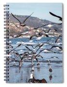 Seagulls Seagulls And More Seagulls Spiral Notebook