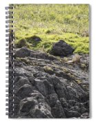 Seal - Montague Island - Austrlalia Spiral Notebook