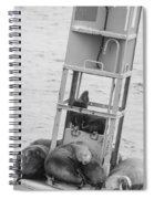 Seal Hammock Black And White Spiral Notebook