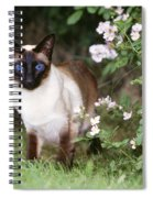 Seal Point Siamese Cat Spiral Notebook