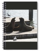 Sealion Discussion Spiral Notebook