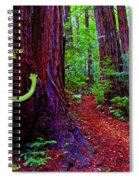Searching For Friends Among The Redwoods Spiral Notebook