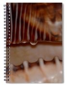 Seashell Abstract 3 Spiral Notebook