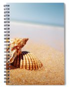 Seashell And Conch Spiral Notebook
