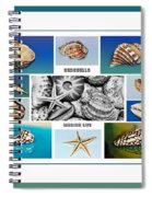 Seashell Collection 3 - Collage Spiral Notebook