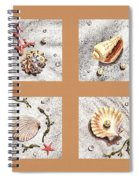 Seashell Collection II Spiral Notebook