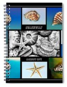 Seashell Collection Spiral Notebook