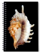 Seashell Lambis Digitata Spiral Notebook