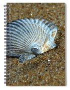 Seashell On The Beach Spiral Notebook
