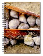 Seashell Reunion Spiral Notebook