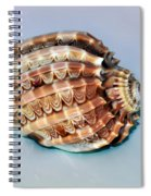 Seashell Wall Art 9 - Harpa Ventricosa Spiral Notebook