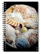 Seashells Baseball Square Spiral Notebook